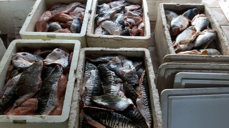 Left or right pescado courmba 23 de novembro de 2017