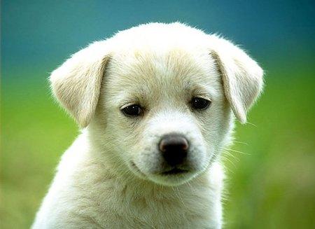 Left or right evitar que o filhote de cachorro chore a noite 7