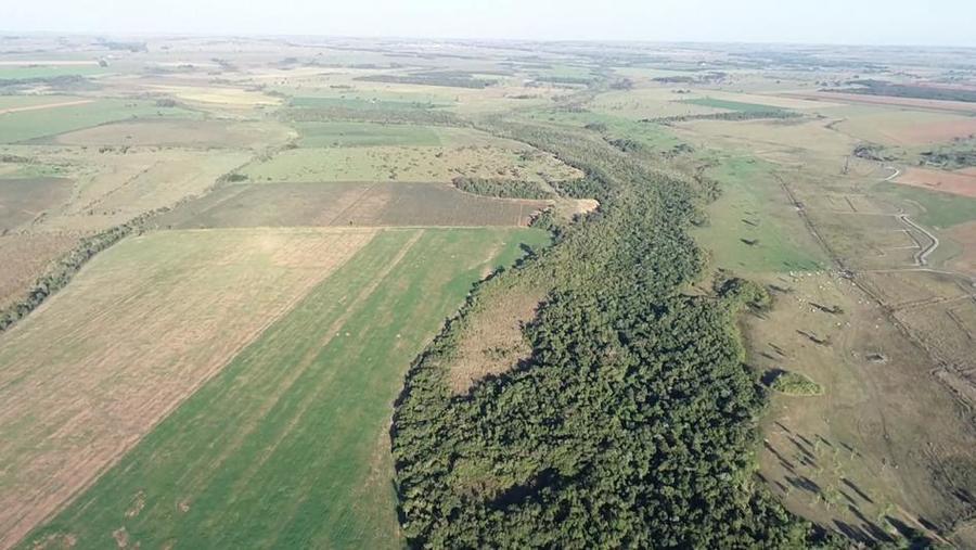 Center desmatamento mata atl ntica deod polis 17 de junho de 2020